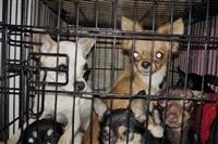 Похищенные собаки, Фото: 26
