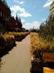 Цветочный джем: Тульское поле в Москве, Фото: 15