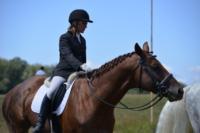 В Ясной поляне стартовал турнир по конному спорту, Фото: 134