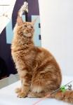 """Выставка """"Пряничные кошки"""" в ТРЦ """"Макси"""", Фото: 53"""