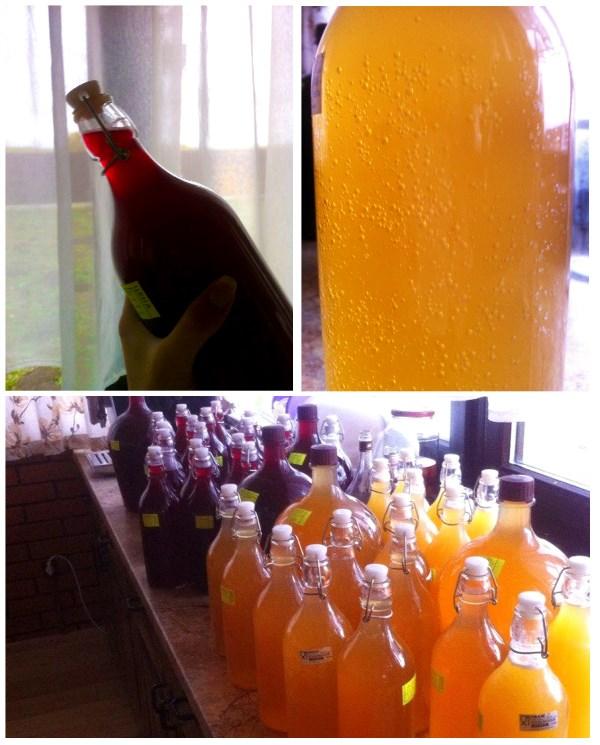 Плоды домашнего сидро- и винокурения :)