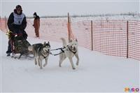 Куликово поле. Гонки на собачьих упряжках., Фото: 81