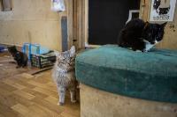 Волонтеры спасли кошек из адской квартиры, Фото: 7