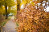 Золотая осень в Туле-2019, Фото: 22