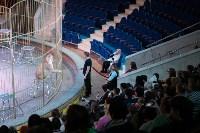 В Тульском цирке родился тигролев, Фото: 17