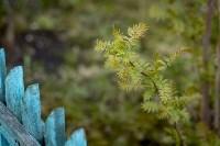 Весна 2020 в Туле: трели птиц и первые цветы, Фото: 35