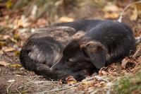 Дворняги, дворяне, двор-терьеры: 50 фото самых потрясающих уличных собак, Фото: 5