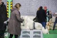 Выставка собак в Туле 14.04.19, Фото: 34