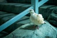 Тульский экзотариум: животные, Фото: 32