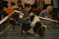 В Туле прошла всероссийская выставка собак, Фото: 17