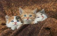 Тульские котики, Фото: 18