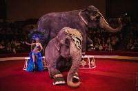 «Шоу Слонов» в Тульском цирке, Фото: 2