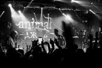 Animal ДжаZ, Фото: 57