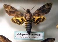 Экспозиция тропических насекомых в Тульском экзотариуме, Фото: 3
