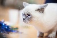 В Туле прошла выставка «Пряничные кошки» , Фото: 108