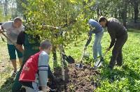 В Пролетарском районе высадили молодые деревья, Фото: 8