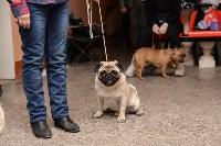 """Выставки собак в ДК """"Косогорец"""", Фото: 64"""