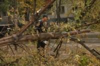 Кронирование тополей на ул. Калинина, Фото: 6