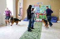 Выставка собак в Туле, Фото: 37
