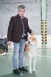 Выставка собак в Туле 26.01, Фото: 58