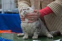 Выставка кошек в Туле, Фото: 34