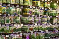 Леруа Мерлен: Какие выбрать семена и правильно ухаживать за рассадой?, Фото: 15