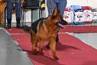 Выставка собак в Туле 26.01, Фото: 14