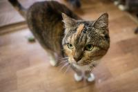 Волонтеры спасли кошек из адской квартиры, Фото: 40