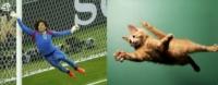 В прыжке кот очень похож на Гильермо Очоа — в погоне за самым сложным мячом в гибкости и прыгучести ему нет равных!, Фото: 6