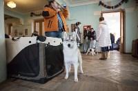 Выставка собак в Туле, 29.11.2015, Фото: 46