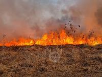 В Федоровке огонь с горящего поля едва не перекинулся на дома, Фото: 10