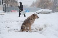 Снежная Тула. 15 ноября 2015, Фото: 6