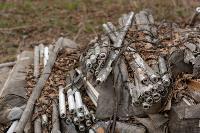 В лесу в Узловском районе обнаружена свалка ртутных ламп, Фото: 1