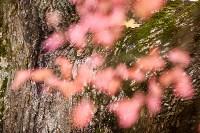 Золотая осень в Туле-2019, Фото: 95
