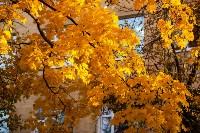 Золотая осень в Туле-2019, Фото: 129
