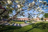 Яблони у кремля, Фото: 15