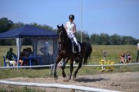 В Ясной поляне стартовал турнир по конному спорту, Фото: 20