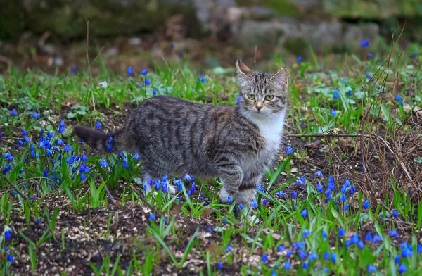 Богородицкий котик