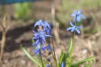 Краски весны в Туле, Фото: 25
