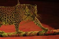 Цирк «Вива, Зорро!» в Туле , Фото: 18
