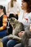 Выставка кошек в Туле, Фото: 36