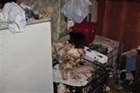 Похищенные собаки, Фото: 2