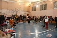 В Туле прошла всероссийская выставка собак, Фото: 3