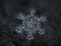 Макрофотографии снежинок, Фото: 3