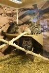 Склеп, кобры, мюзикл и полуночный дозор: В Тульской области прошла «Ночь музеев», Фото: 46