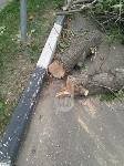 Читатель о вырубке деревьев на ул. Революции: «Была красивая зеленая улица, а теперь…», Фото: 12