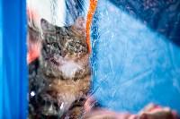Пряничные кошки, Фото: 10