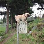 Фотогеничный пес Норм из Сиэтла, Фото: 11