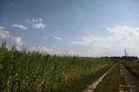 Поле конопли под Тулой, Фото: 12