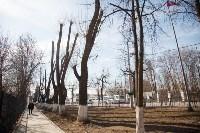 Деревья, кронированные три года назад., Фото: 3